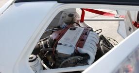 14. Int. VW Pfingsttreffen Flugplatz Bautzen vw pfingsttreffen, bautzen, flugplatz  Bild 116412